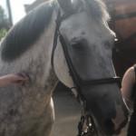 Катание на лошадях в детском творческом клубе Шале в Измайлово